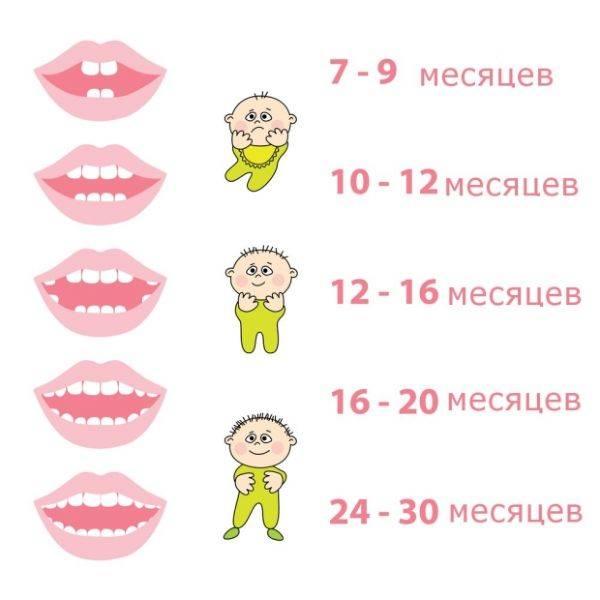 Этапы прорезывания зубов