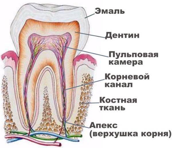 каналы зуба
